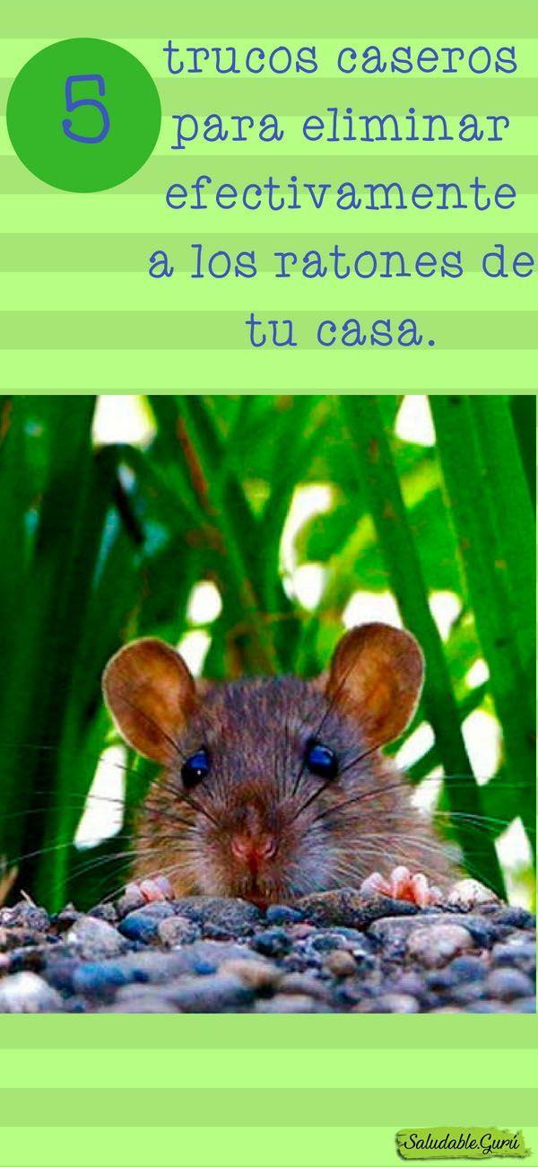 Como Acabar Con Las Ratas En El Jardin 5 Trucos Caseros Para Eliminar Efectivamente A Los Ratones De Tu