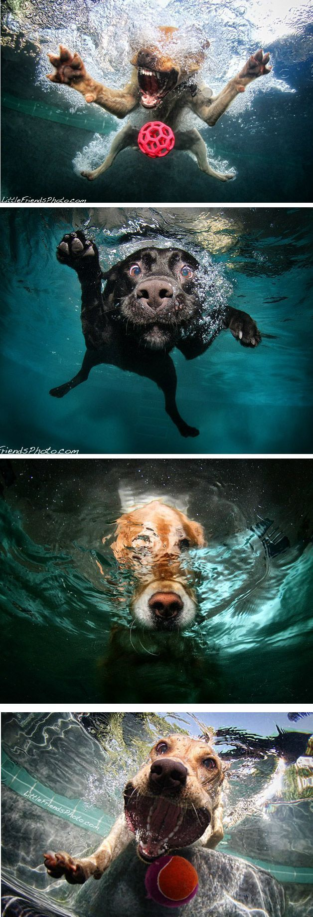 Underwater dog selfies