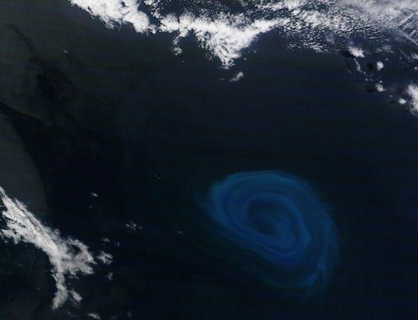 plankton-fuelled ocean eddy is 150 kilometers wide