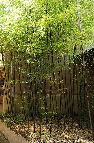 14 best courtyard gardens images on Pinterest | Courtyard gardens ...