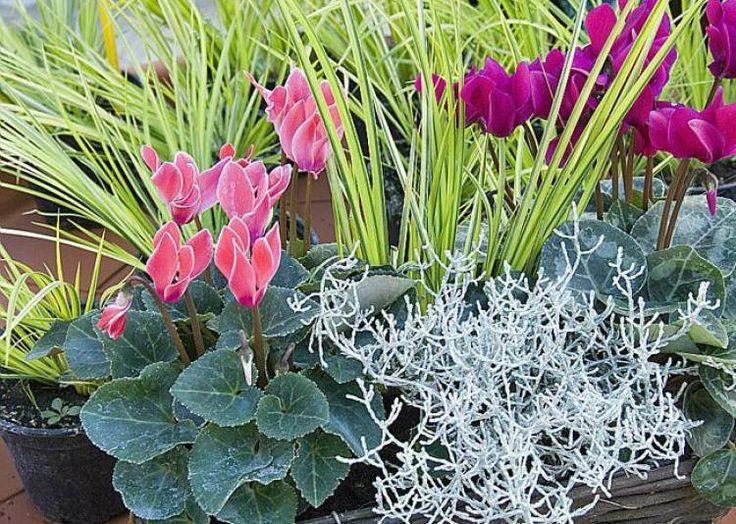 Compositions fleuries automnales pour des potées qui durent -  F. Marre - Rustica