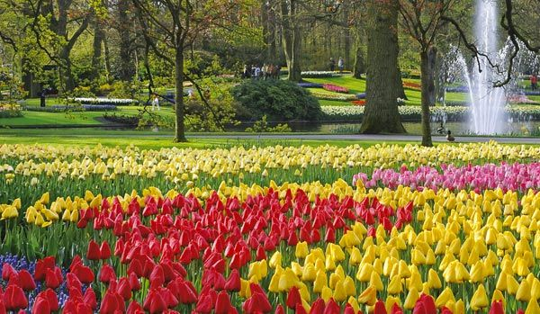 This Dutch garden in Lisse creates tapestries from bulbs like tulips and daffodils by planting millions of new ones every year. You have to visit in spring. At Berkeley, we only raise 'real' species for decades.