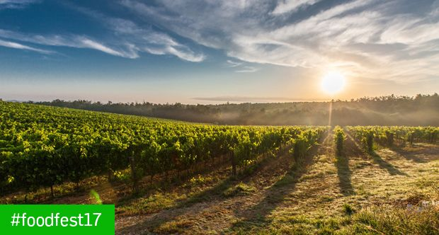 FRidA. La ricerca su agroalimentare e nutrizione in 31 racconti