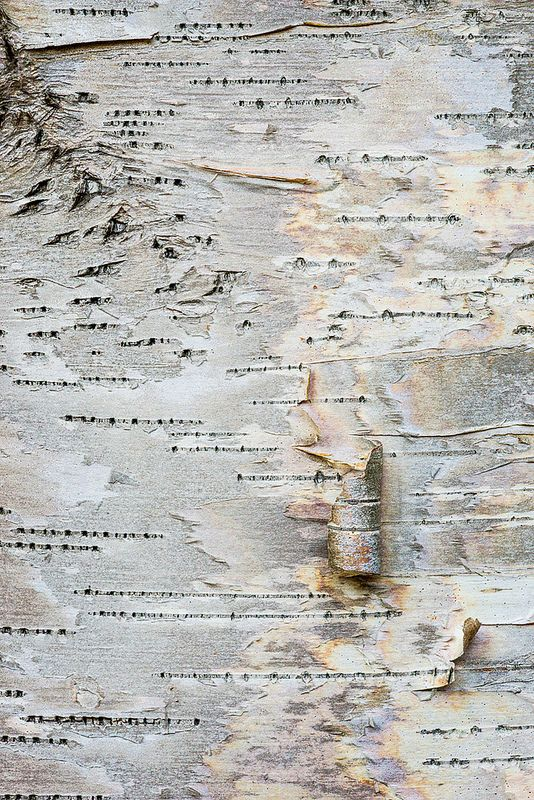 Doesn't this look like an OLD TREASURE MAP ????  Mountains, water names -places! birch bark