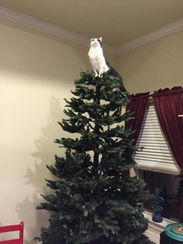 """I am the angel in this house hence I belong at the top of this tree."""