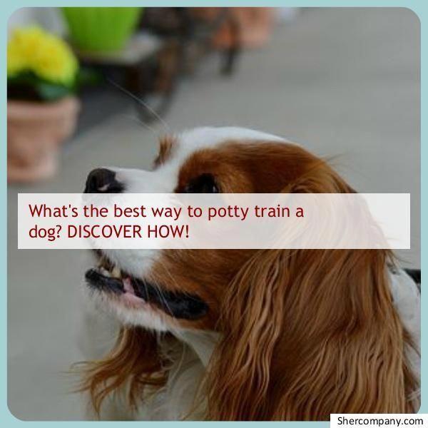Dog Obedience Masterdogtrainingtips Dog Training Obedience Dog