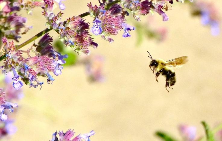 Impressionist Bees - by Tony Karp - http://nvart2.com/nvart2-impressionist-bees.htm