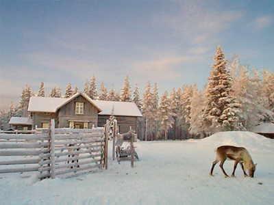 Reindeer farm near Levi Finland.