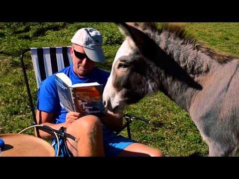 Kul klipp på spännande bok, läsande hund och tjuvaktig åsna.