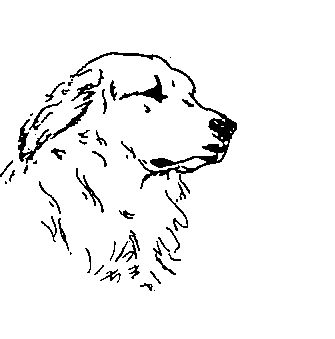 Great Pyrenees Drawing GREAT