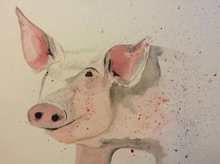Pig. Watercolour