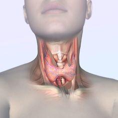 29SHARESFacebookTwitter Причините за проблемите с щитовидната жлеза могат да бъдат най-различни. Първите признаци на заболяването са постоянна умора и апатия. На пациентите започват да падат косите, те бързо наддават на тегло и страдат от депресия. Ето защо, ако забележите подобно нещо, не забравяйте да се консултирате с лекар. За да се избегне коварното заболяване, тялото...