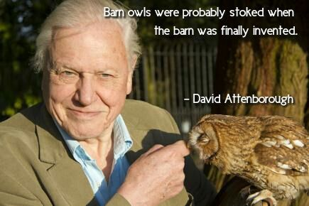 David Attenborough on owls #shitty #quote #nottired #shit #bored #day #wtf #lol #fuck