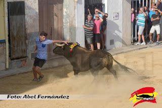 torodigital: Quartell da el inicio a sus fiestas con un toro d...