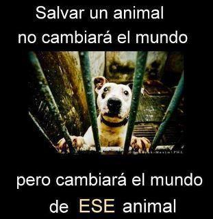 Sé su voz, ellos no pueden defenderse de nuestra tiranía. #derechos #animales #veganismo