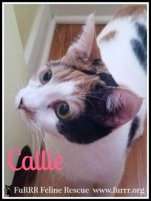 Callie - adopted