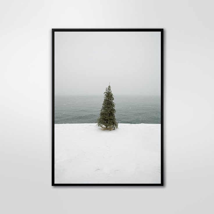 Solo Christmas Tree, Color Photography, Art Print, Wall Decor, Abstract Large Poster, Modern, Minimalist by PrintingDots on Etsy
