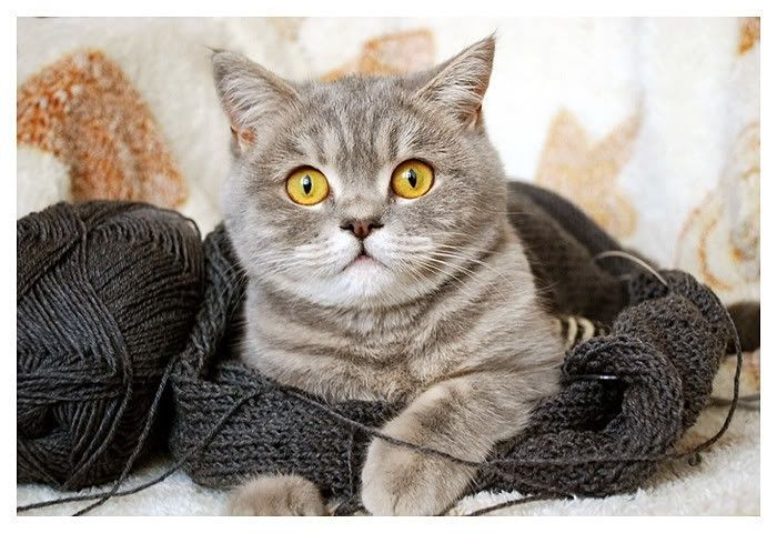 подробному вязка котов с картинками снимках девушка