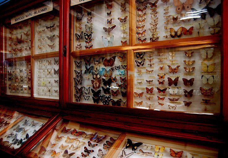 Zoology Museum, Babes-Bolyai University in Cluj, Romania