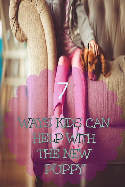 Ways Kids Can Help With The New Puppy/Dog