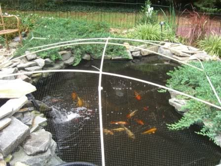 Diy pond winter leaf cover build for the home for Koi pool cover