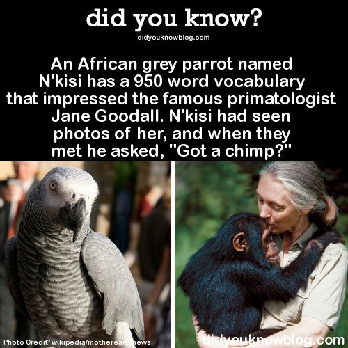 Interesting fact about jane goodall