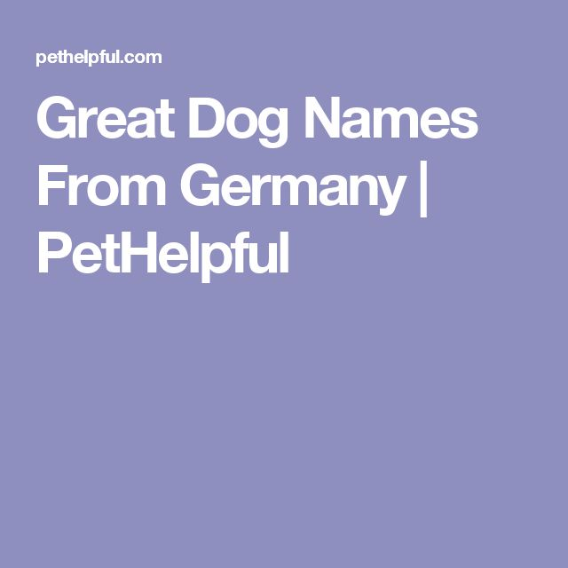 Great Dog Names From Germany | PetHelpful