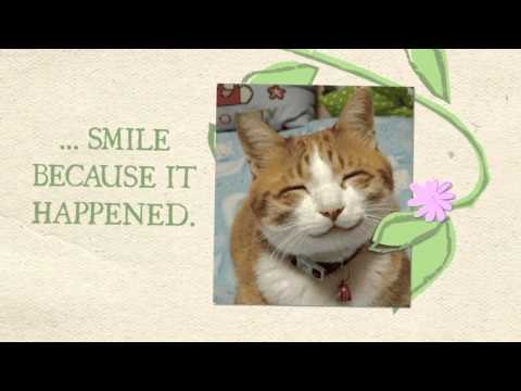 Motivational Cats Video: Virtues of Cats    Cats & men are not so different, ops... maybe cats are way better sometimes.    Do we have to learn from cats ?!
