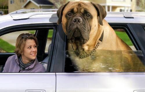 Parodie de chiens, nos stars préférés et de Graphisme de chiens - Voici les plus grand animaux du monde