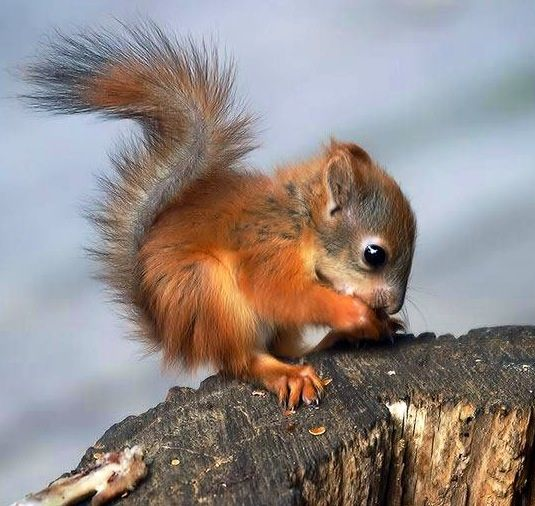 What a cute baby squirrel !