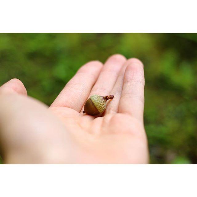 【1__cocoa】さんのInstagramをピンしています。 《. 小さい秋、みいつけた🍂 . #軽井沢#北軽井沢#森林#お写んぽ#どんぐり#カメラ女子#一眼レフ#デジイチ#キャノン#白いカメラ#単焦点#写真好きな人と繋がりたい#写真撮ってる人と繋がりたい#ファインダー越しの私の世界#karuizawa#kitakaruizawa#natural#donguri#photo#photography#coregraphy#camera#canon#eoskissx7#canoneoskissx7#40mm》