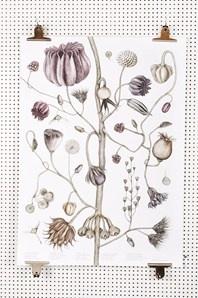 Vacker och detaljrik affisch av illustratören Jonna Fransson föreställande en frökarta med inspiration från gamla skoltavlor.