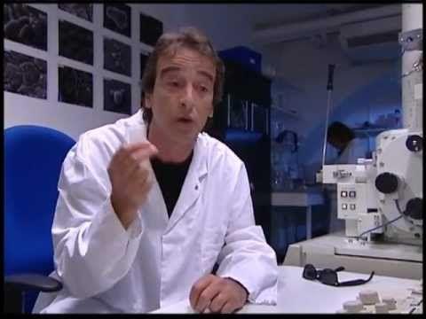 ▶ Fred et Jamy : le système immunitaire - YouTube