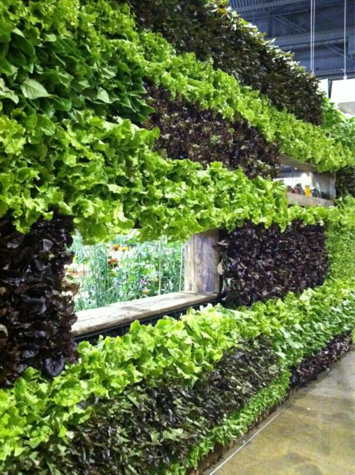192 Best Images About Living Walls On Pinterest | Gardens, Green