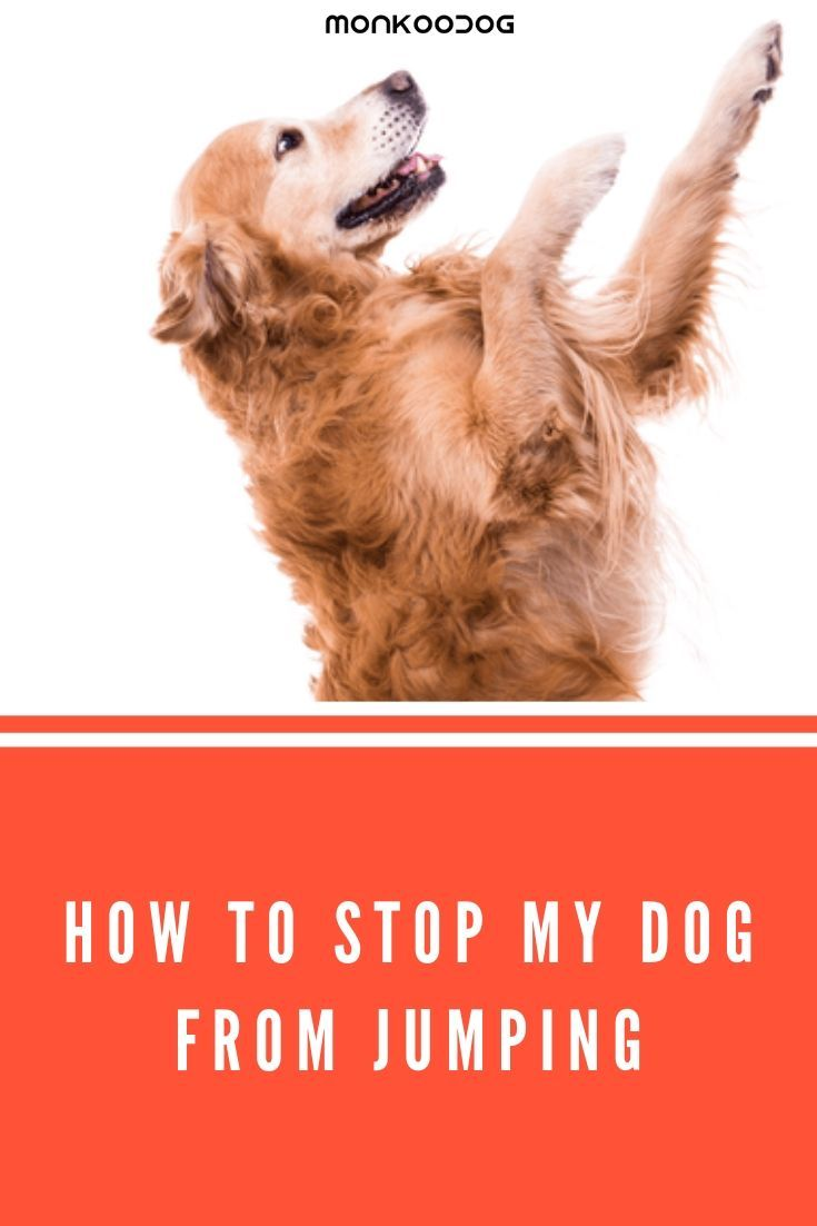 How To Train Your Dog Not To Jump Do You Want To Know How To Stop