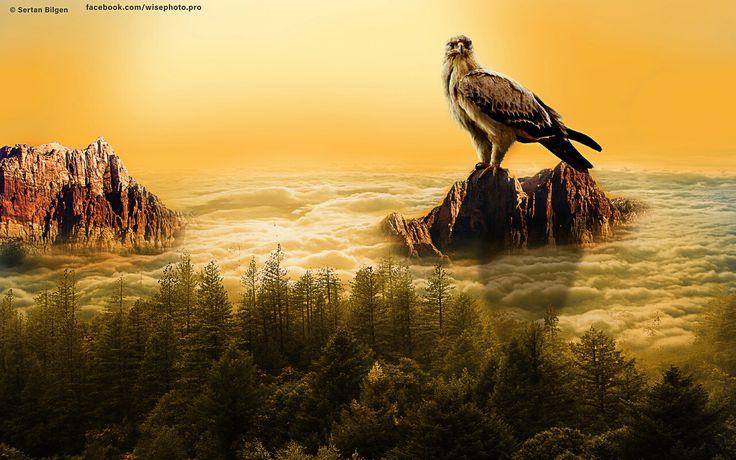 American hawk ( Photoshop CC )  #photography #photographer #landscape #sunrise #seaside #sunset #beautiful #excellent #manipulation #hawk #clouds #bird #natural #nationalgeographic #forest