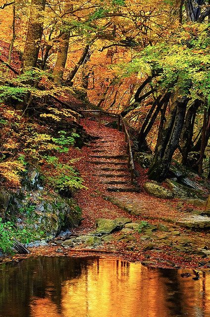 The virgin forest of Fraktos, situated in the northeastern part of the Prefecture of Drama in northern Greece under the highest summit of central Rhodope Mountains, is the only old-growth forest in the country and among the most unique in Europe.