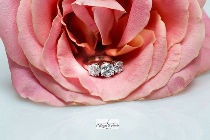 Three-stone round cut diamond ring gracefully placed in a blooming pink tea rose