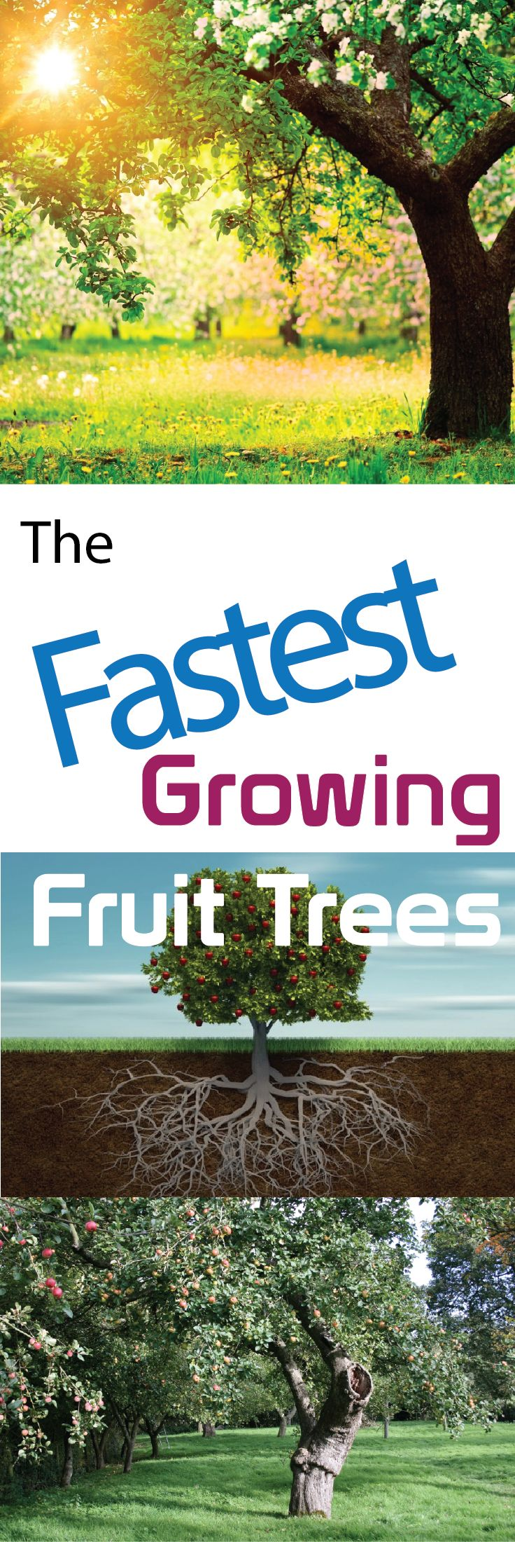 fastest growing fruit trees