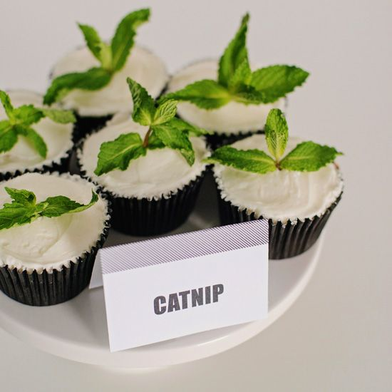 Catnip Food For Cats