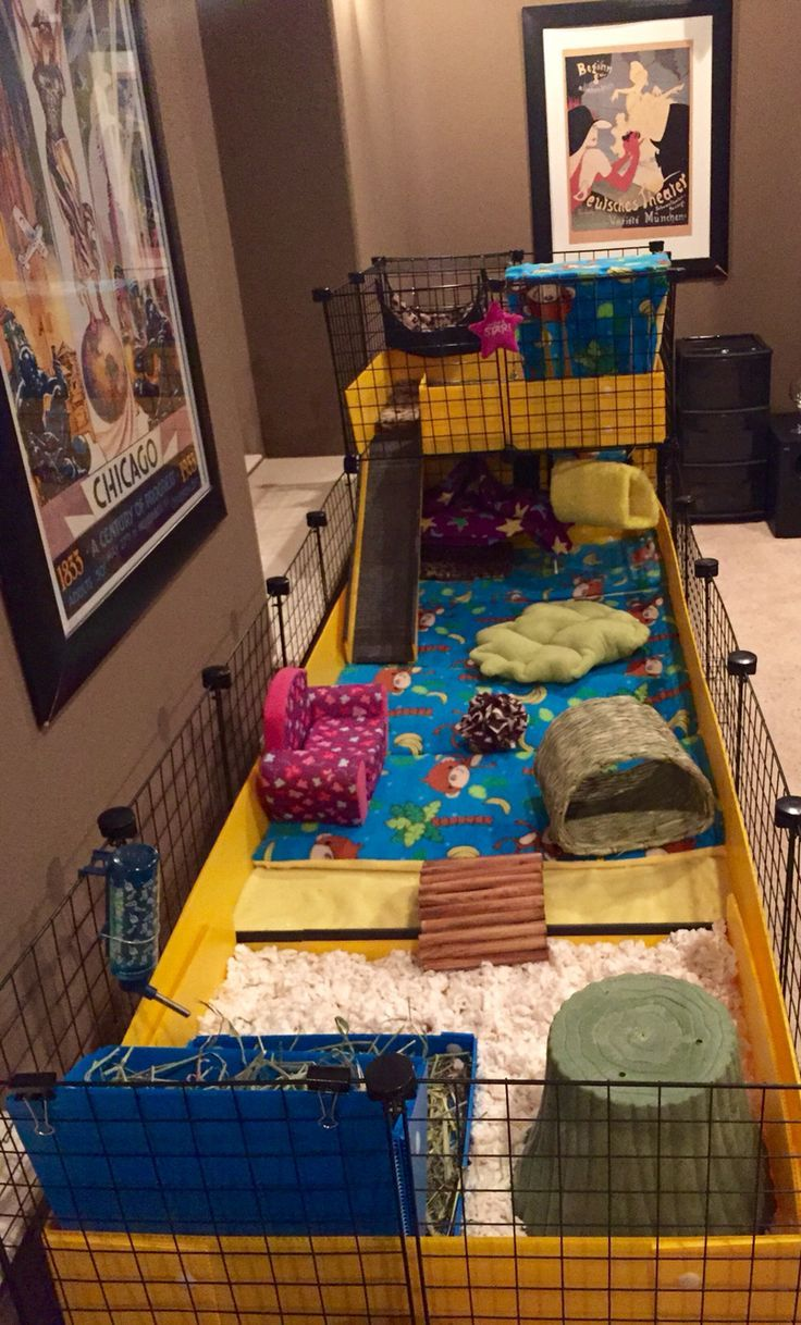 "Share the post ""Amazing Guinea Pig Homes!"" FacebookGoogle+LinkedInPinterestStumbleUponTwitterEmail As you may know, we have two guinea pigs here, Jessie and Leia. In theory they belong to the kids, but let's be honest, they are mine! They live in an indoor cage. We like ours being inside with us because it means that they get plenty Read more >"