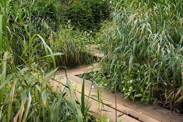 Zig zag wooden path over a bog garden