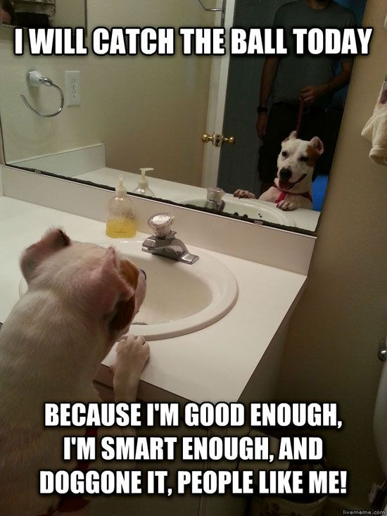 Doggone it, People like me! ~ http://weruletheinternet.com/2013/07/08/a-few-funny-animal-pictures-to-help-you-get-through-monday/