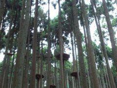 兵庫県篠山市にあるフォレストアドベンチャー丹波ささやまは思いっきり身体を動かすことが出来て気分リフレッシュ 森の中の木をそのまま使ったアスレチックがあって空中散歩やロープを渡ったりジップスライドで森の中を移動してみたり 休日は混み合うので平日休みがある人は平日に行くのをおすすめします  #アスレチック #レジャー #ジップライン #兵庫 tags[兵庫県]