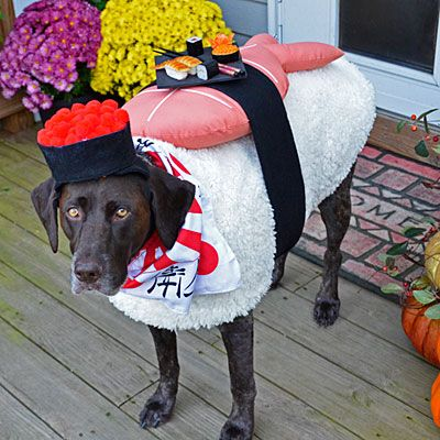 The 7 Hottest New Dog Costume Trends You Need to See   DogVacay Official Blog
