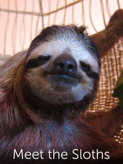 Meet the Sloths - super cute program. http://xfinitytv.comcast.net/watch/Meet-the-Sloths/5502843906390473112/full-episodes#filter=tv&episode=6926022499839249112