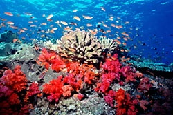 Buying coral jewelry supports destruction of reefs.