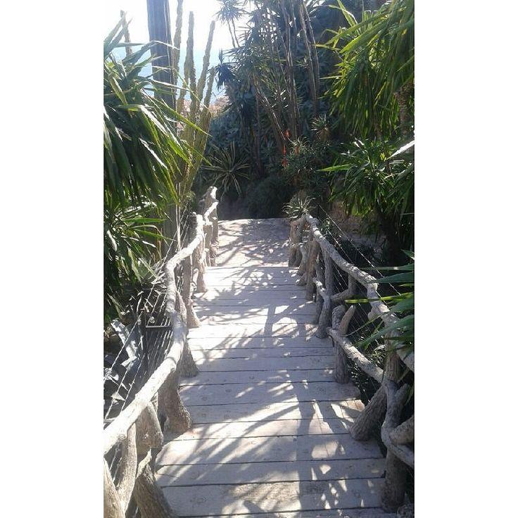 #Rocher The exotic graden of monaco! Le jardin exotique de monaco! #monaco #garden #exotic #plants #pont #love #picoftheday #picture #like4like #follow by mxl_tornado from #Montecarlo #Monaco