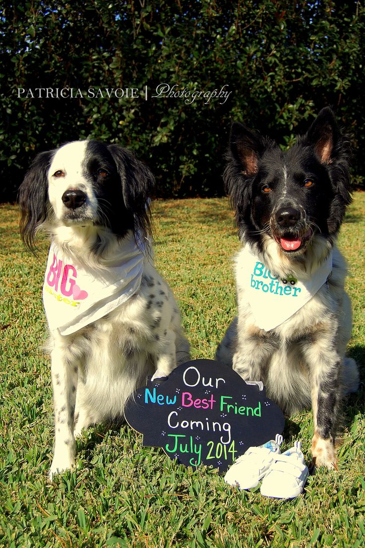 "Pregnancy announcement with our 4 legged kids. ""Our new best friend coming soon!"""