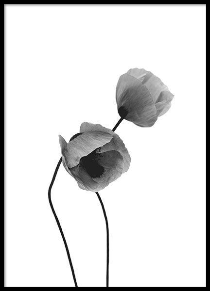 Botaniske plakater og posters | Plakater og posters med planter og blomster | Desenio.no